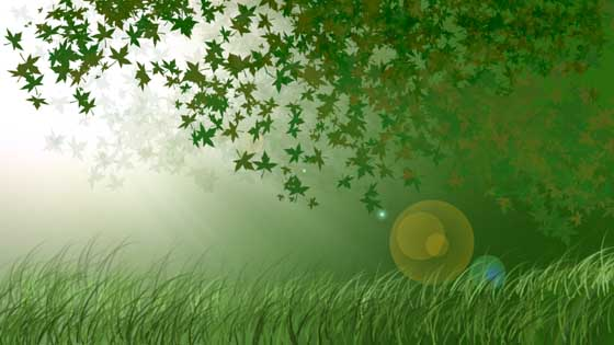 Tutorial-Photoshop: Crear bosque con Photoshop