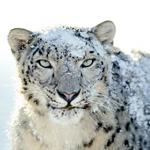 Imagen de Mac OS X Snow Leopard Wallpapers